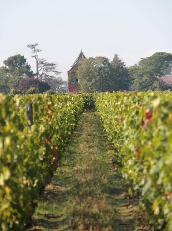 Château Bellegrave - Allée de vignes